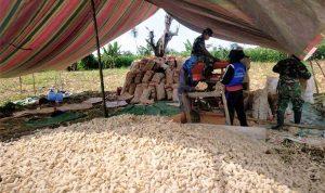 >> Personel TNI Kodim Bolmong saat membersihkan Jagung dari tongkolnya.