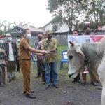 >> Walikota Caroll Senduk, saat menyerahkan hewan kurban.