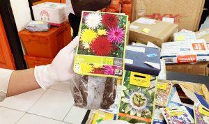 >> Kemasan benih ilegal asal luar negeri yang disita Bea Cukai Manado
